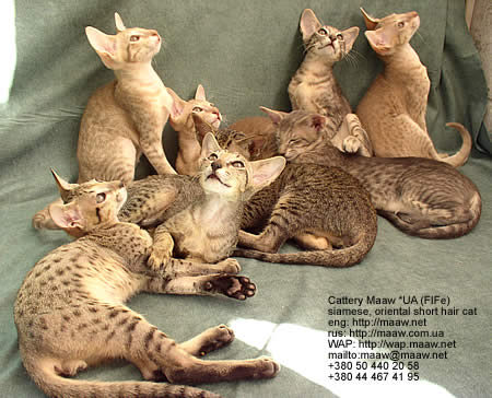 "kittens picture, litter ""C"""